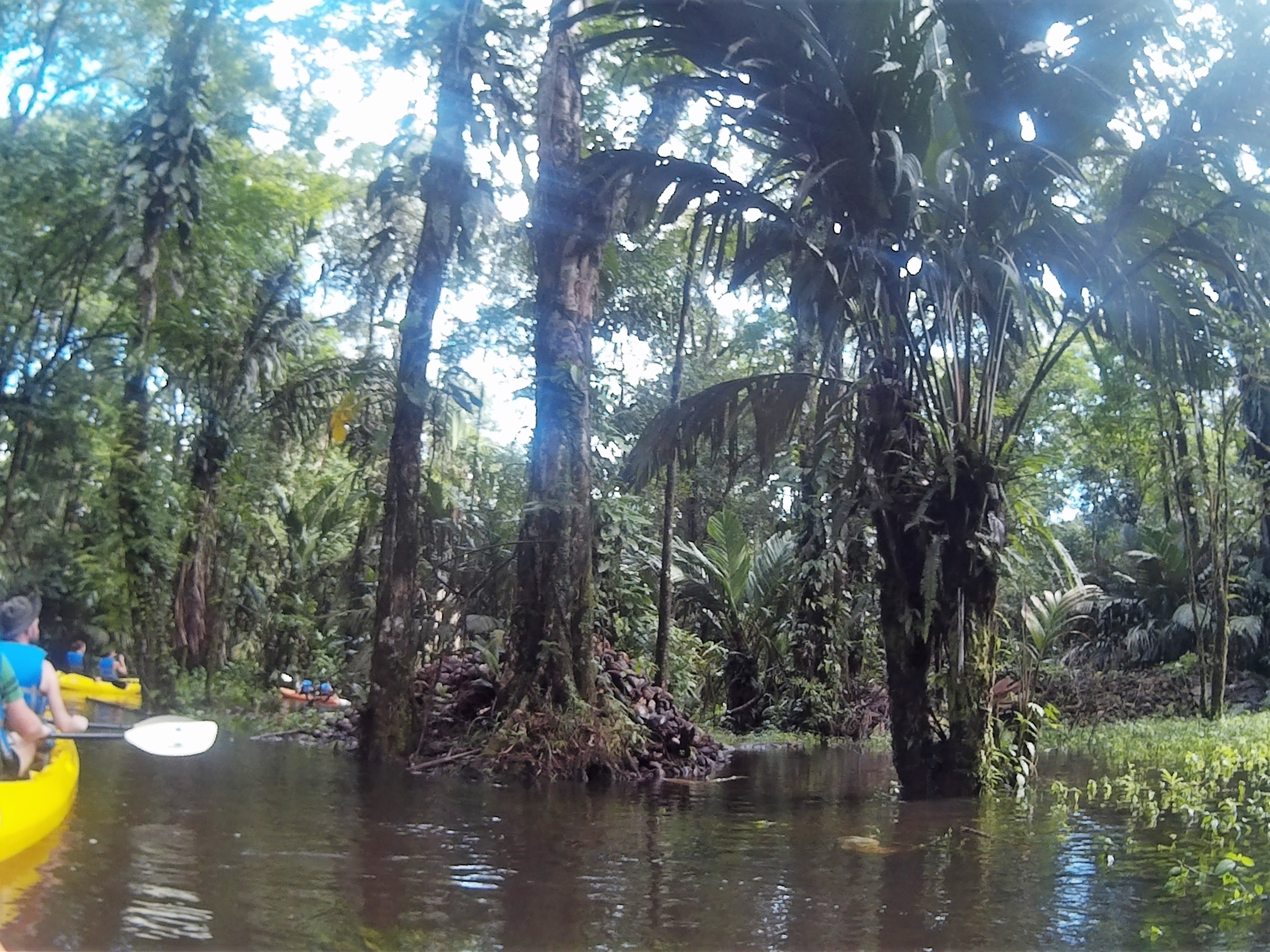 Top adventurous things to do in Costa Rica - kayaking down the narrow canals with jungle surroundings
