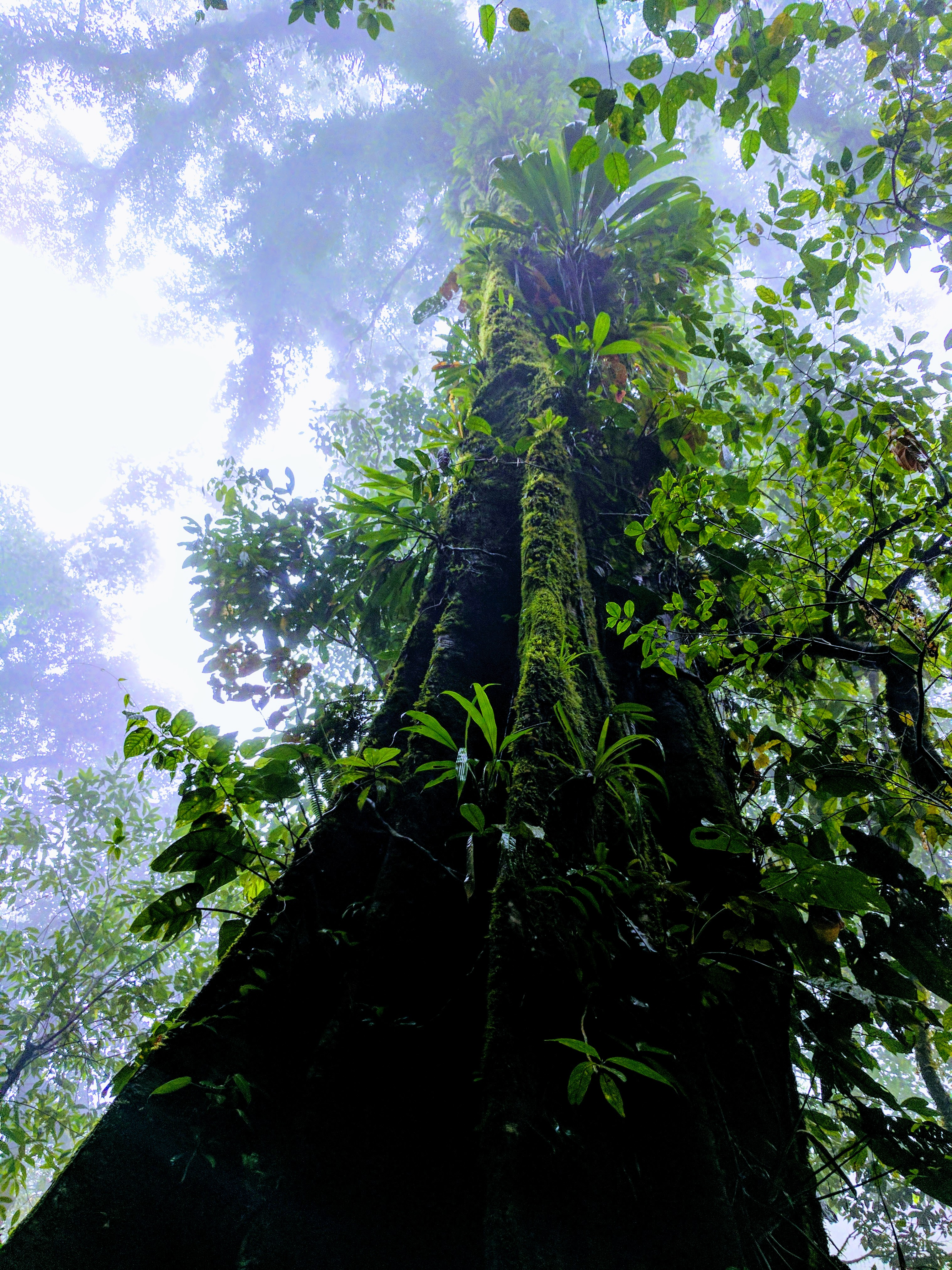 Things to do in arenal - the base of a huge tropical jungle tree