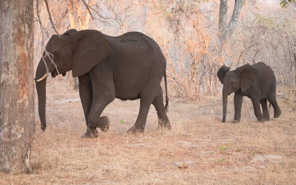 Best Place for Safari in Africa | See the Big 5
