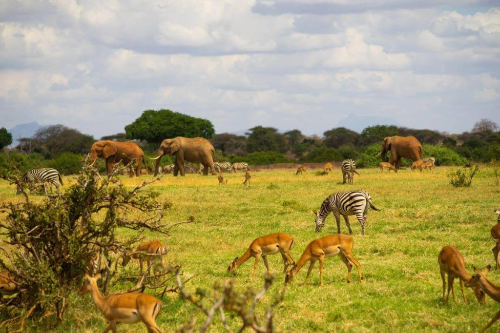 Best places to Safari in Africa - different animals on a kenya safari