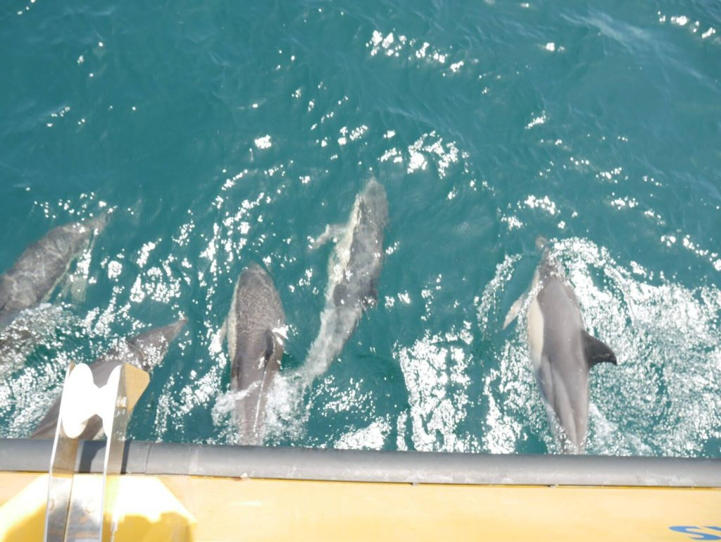 Things to do in Gibraltar - dolphins on the strait