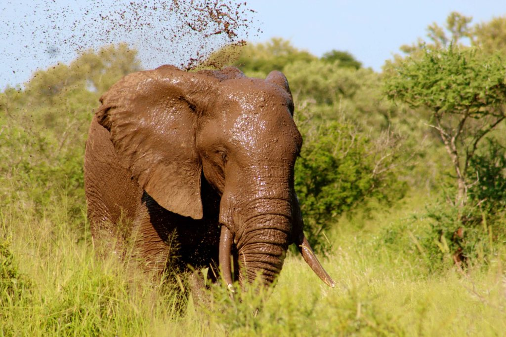Best place for safari in Africa - Elephant at Kruger National Park South Africa