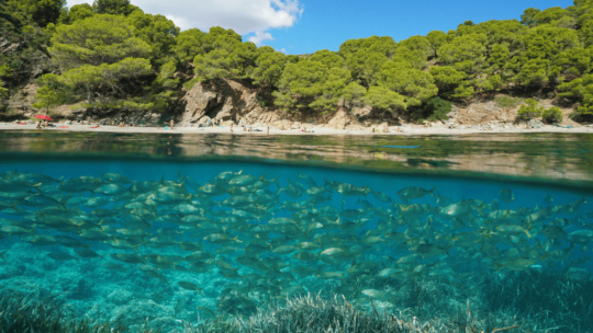 Discover the 10 Best Places to Snorkel in  Europe